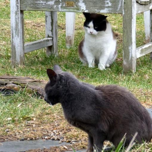 GG Domino cats