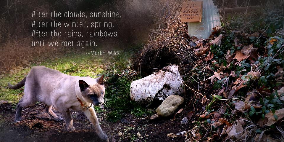 Merlin Gris Gris  cat Grave-001