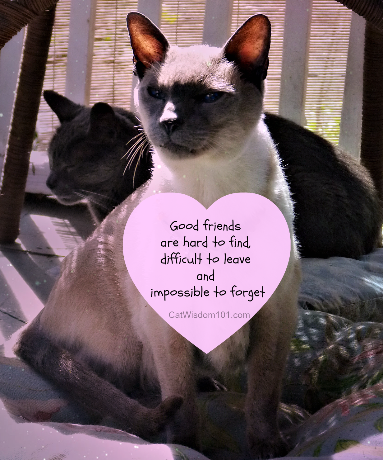Merlin and Gris Gris cat friends quote