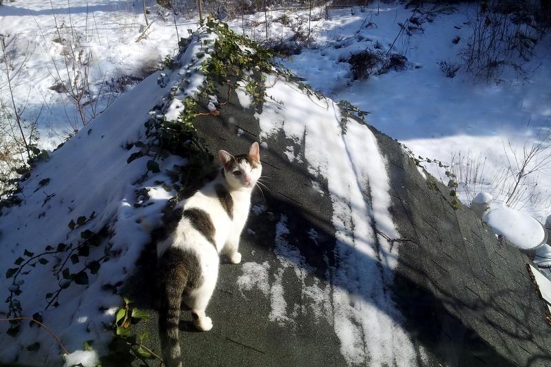 Mancat Monday Up On the Roof
