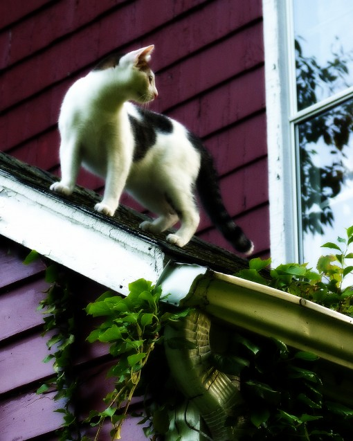 cat-on-roof-odin