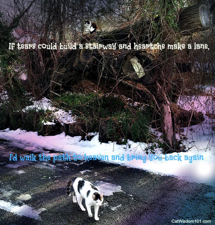 cat quote journey heaven