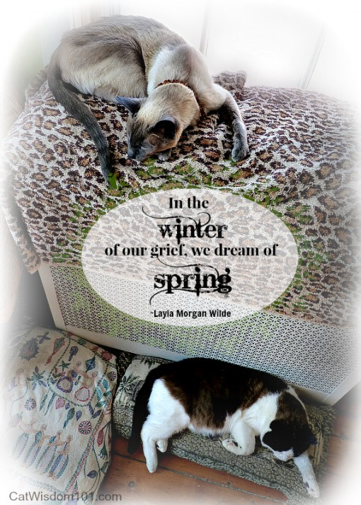 cats quote dreaming of spring