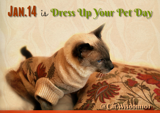 dress_up_your_pet_day