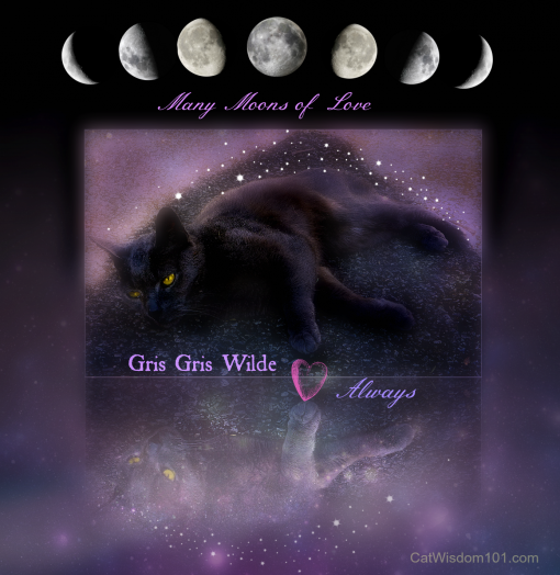 outdoor-cat-nap-driveway-gris-gris-510x524 Loved To The Moon and Back: 9/11, Pet Memorial Day, Blessing of the Animals
