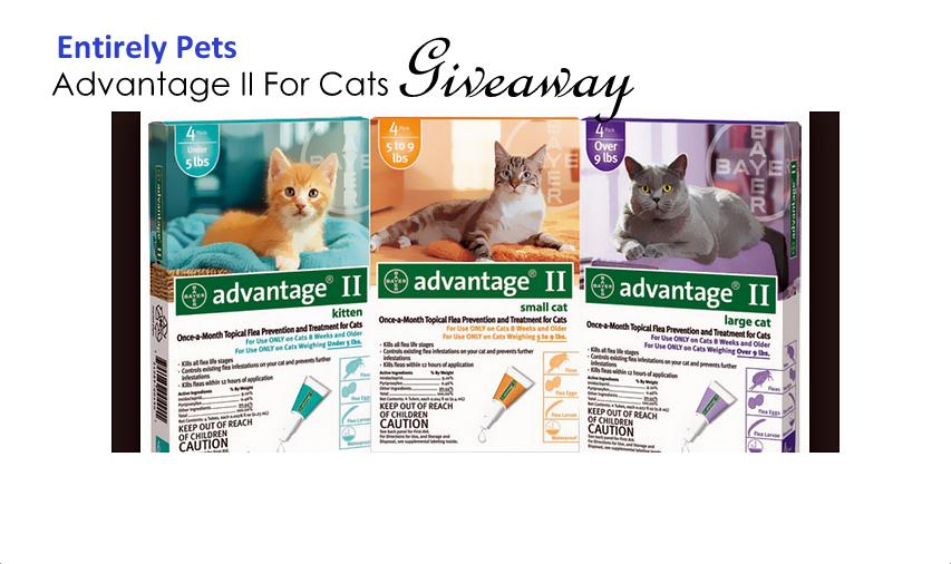 Advantage II cats giveaway