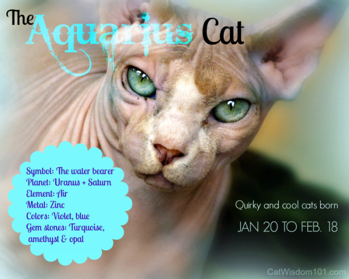 Aquarian Cats For Peace