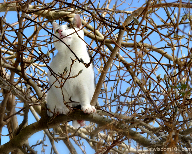 Odin the cat getting a view in branches sky