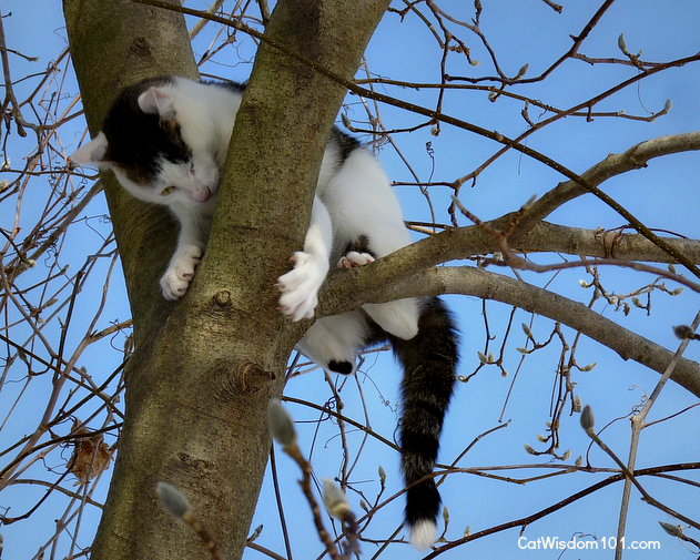 Odin the cat claws in tree