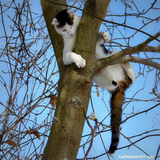 Odin-climbing-tree-down-510x511 Answer Your Cat's Question Day Goes International