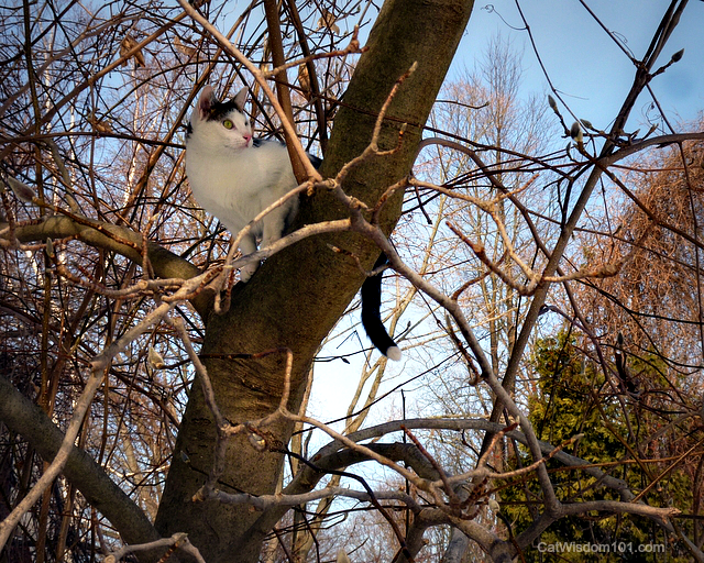 Odin the cat magnolia tree view