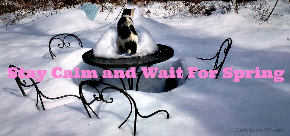 cat in snow spring