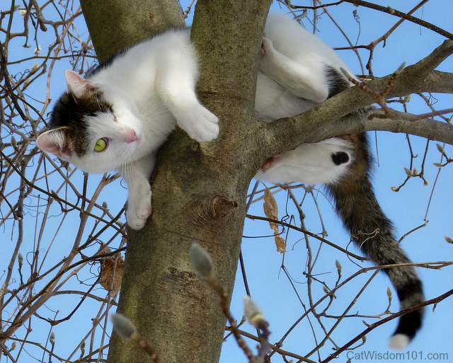 Odin the cat dangling from  tree