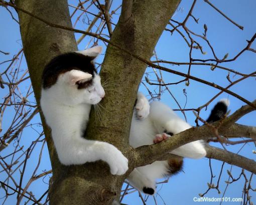 SNOW_Cat_ODIN