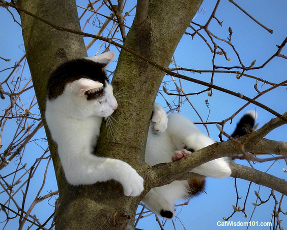 Odin the cat in tree playing