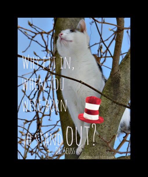 cat quote- dr. seuss -cat in the hat day