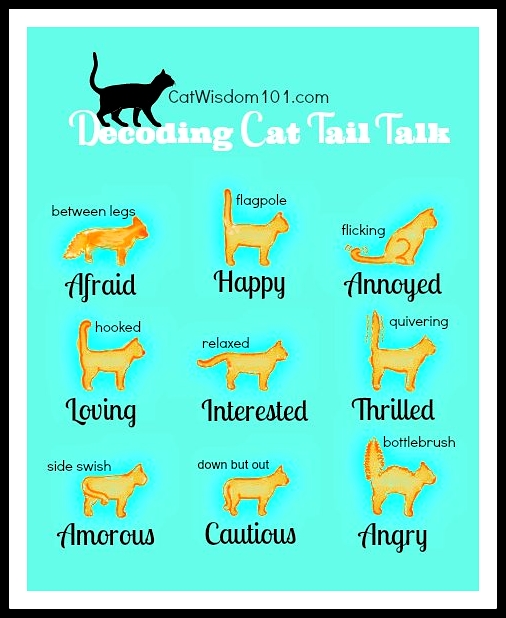 cat tail talk decoded