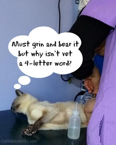 Merlin-vet-cat- examination