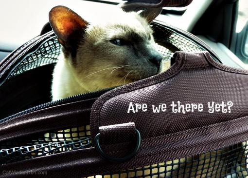 Merlin-vet-Sleepypod-cats