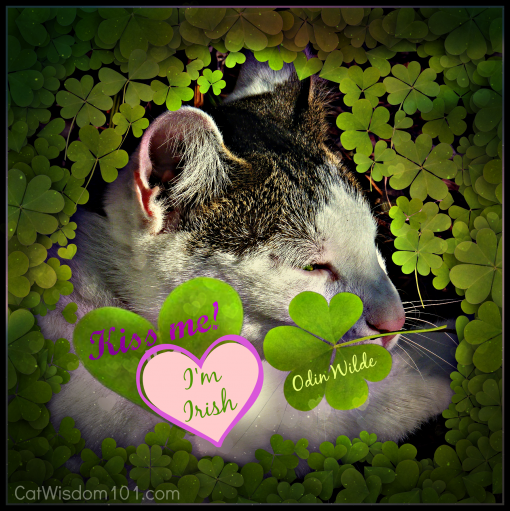 St.Patrick's day-cat-four leaf clover-kiss me