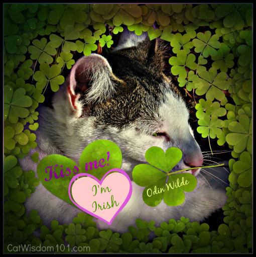 St.Patrick's day-cat-four leaf clover-kiss me
