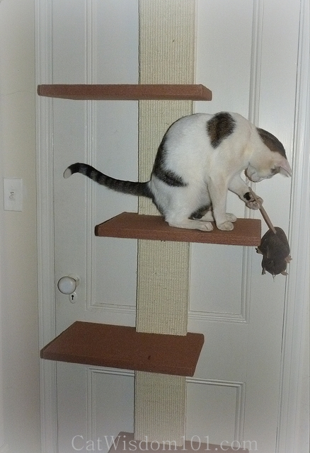 cat playing climbing shelves