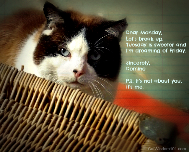 domino cat porch-quote monday