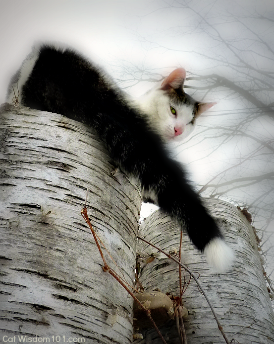 odin cat birch tree
