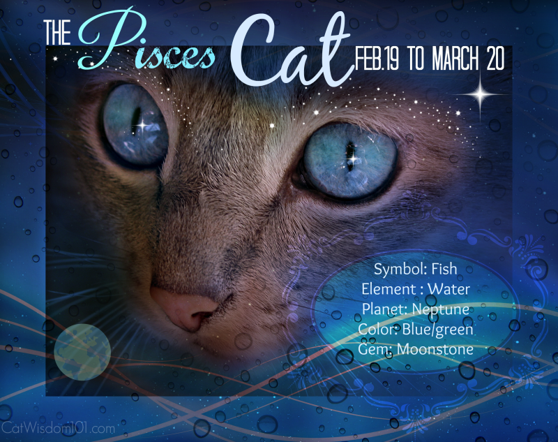 pisces-cat-e1445720743477 Life Changing Super Full Moon Astrology Plus Creative Vintage Cat Calendars