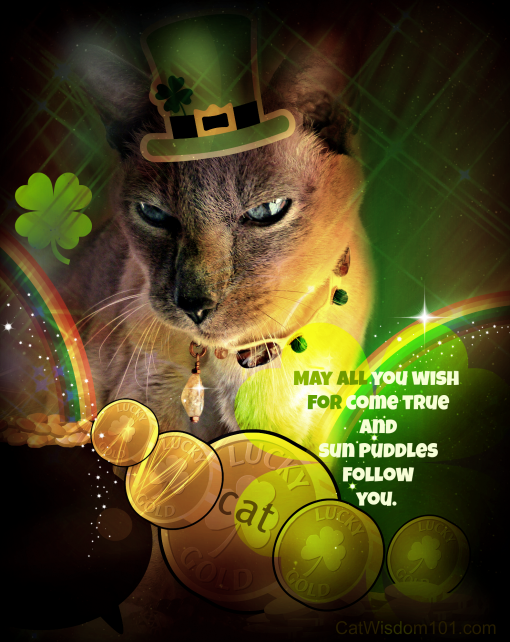 st.patrick's day-cat-catwisdom 101-lucky-gold