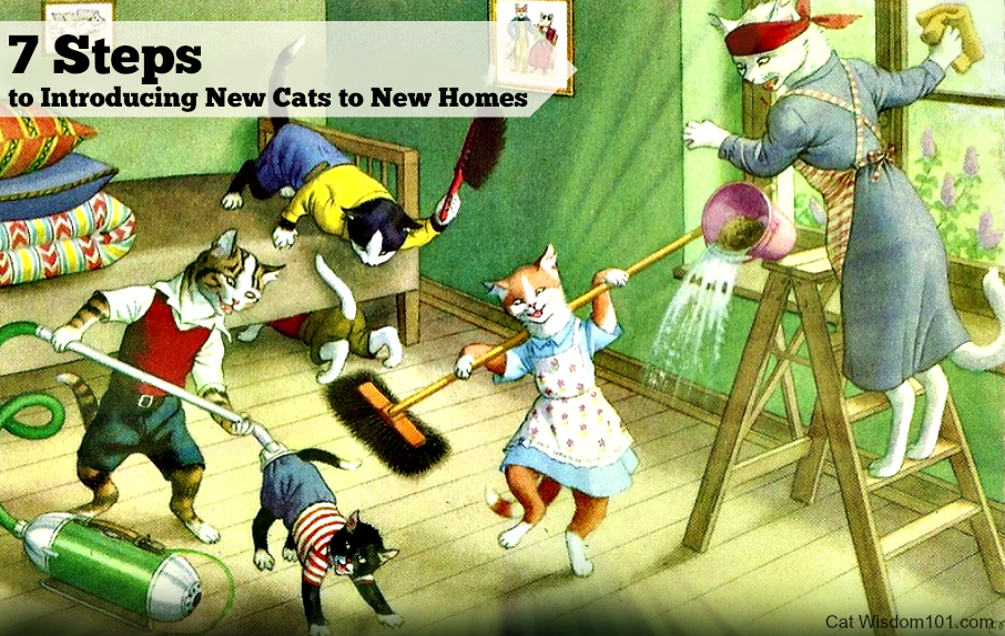 7 Steps For Introducing New Cats To New Homes