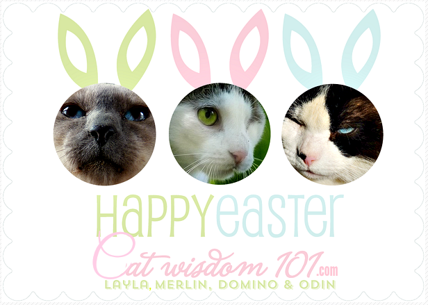 Easter cat card-cat wisdom101