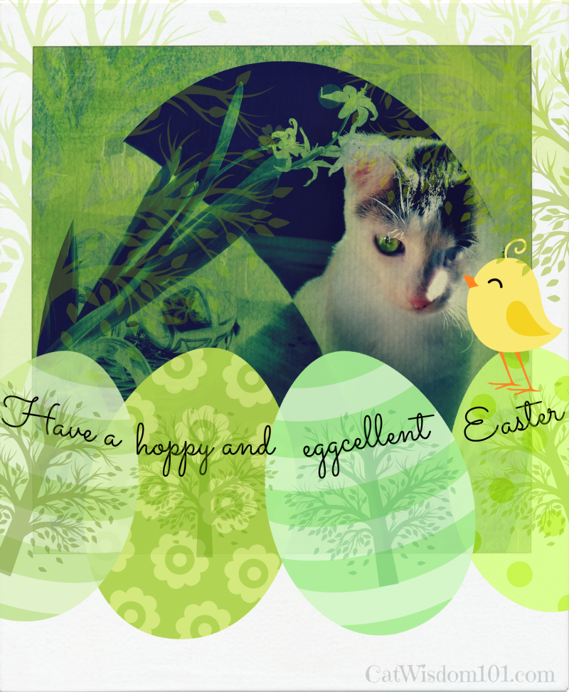 Easter-cat-crd