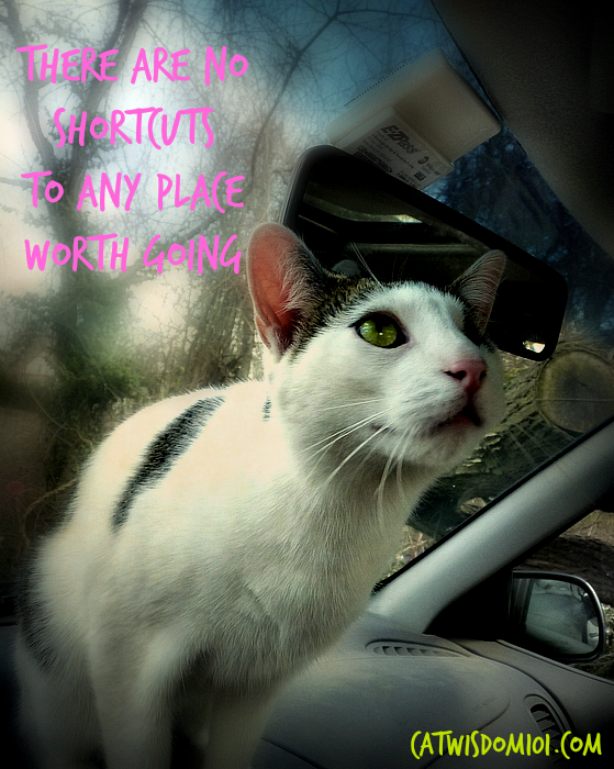 Odin the cat in car-shortcut quote