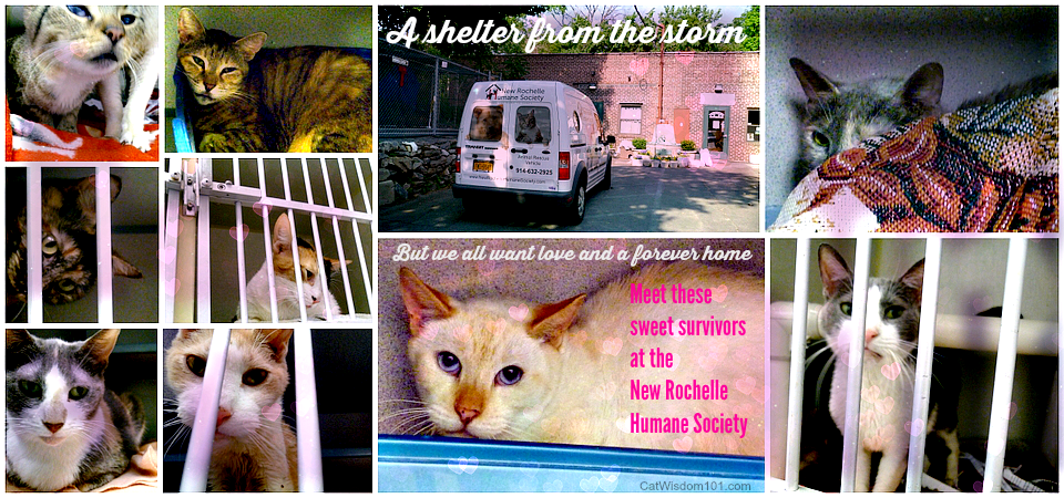 New Rochelle Humane Society rescued cats