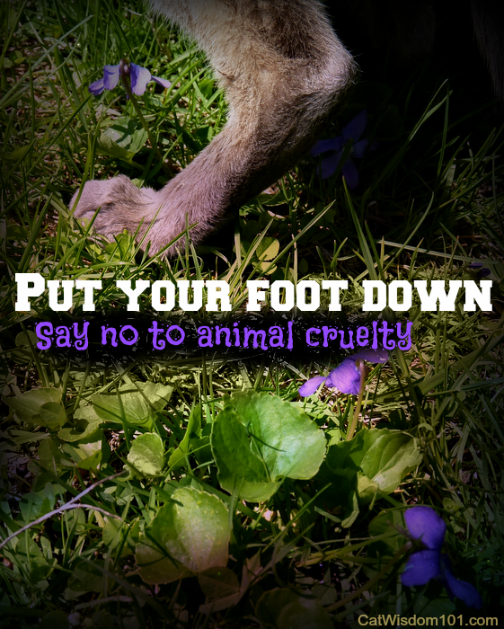 Merlin-cat- put foot down-say no animal crulety