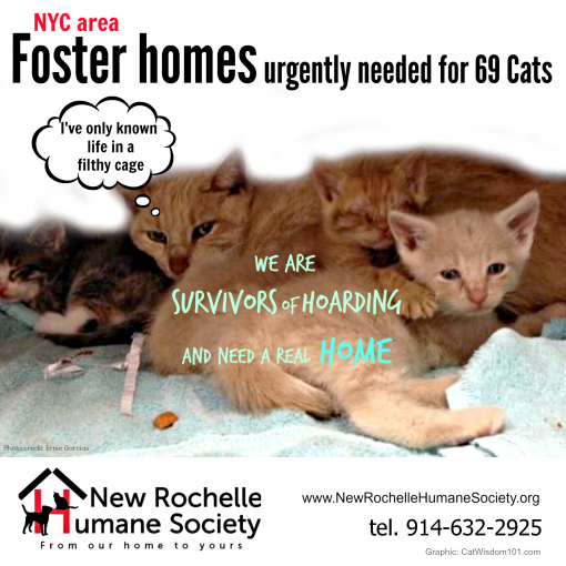 NRHS-cat adoption foster PSA