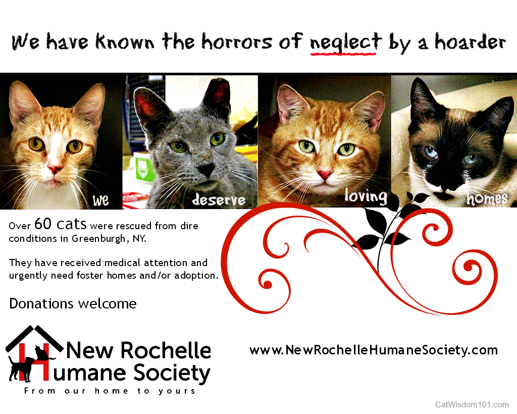 Help Me to Help 69 Cats Rescued From Hoarder Horror In Westchester County, NY