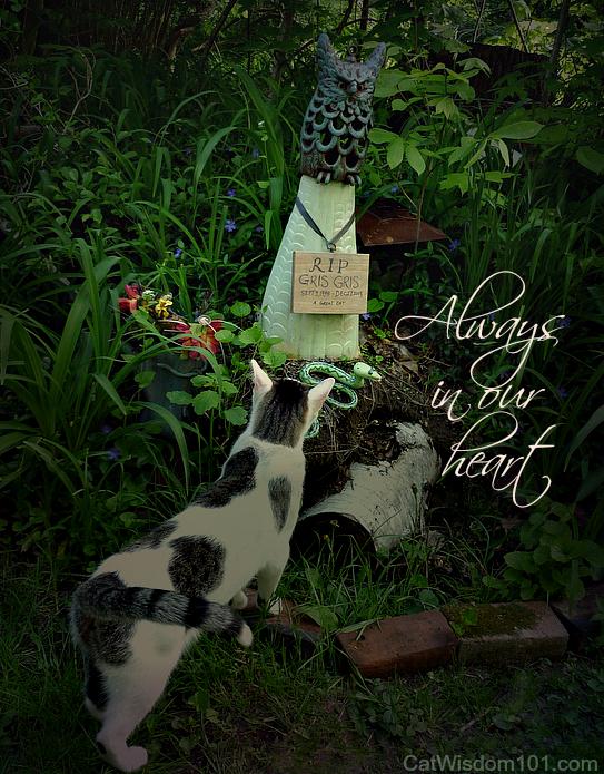 Odin-cat-grave-memorial day