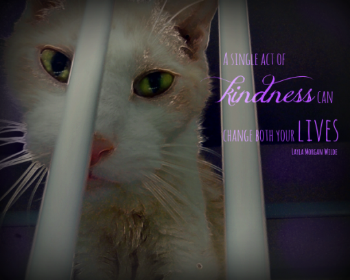 cat abuse quote-kindness