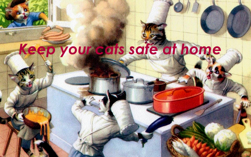 cat safety home-vintage cats cooking