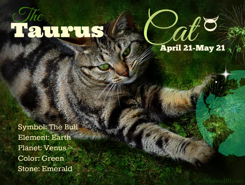 Taurus, The Cheshire Cat of Cats & Domino's Birthday