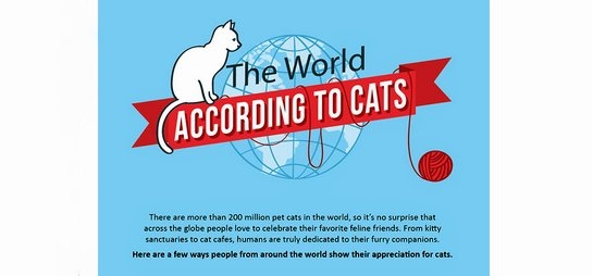 world according to cats infographic