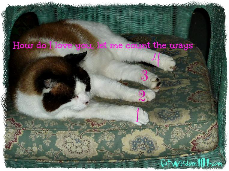 Domino cat-mancat monday