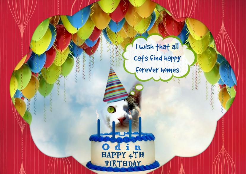 Odin 4th birthday cat-cat wisdom 101