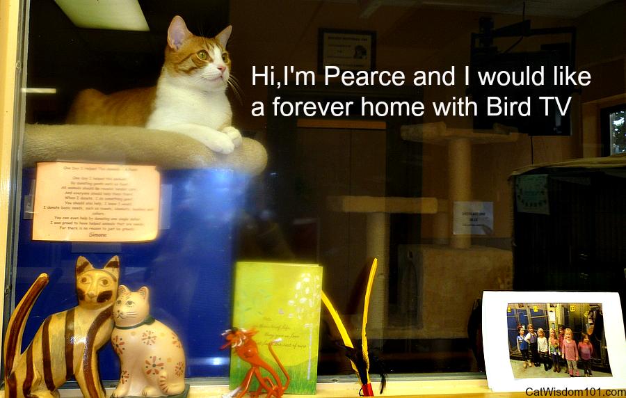 Pearce-cat-NRHS-adoption