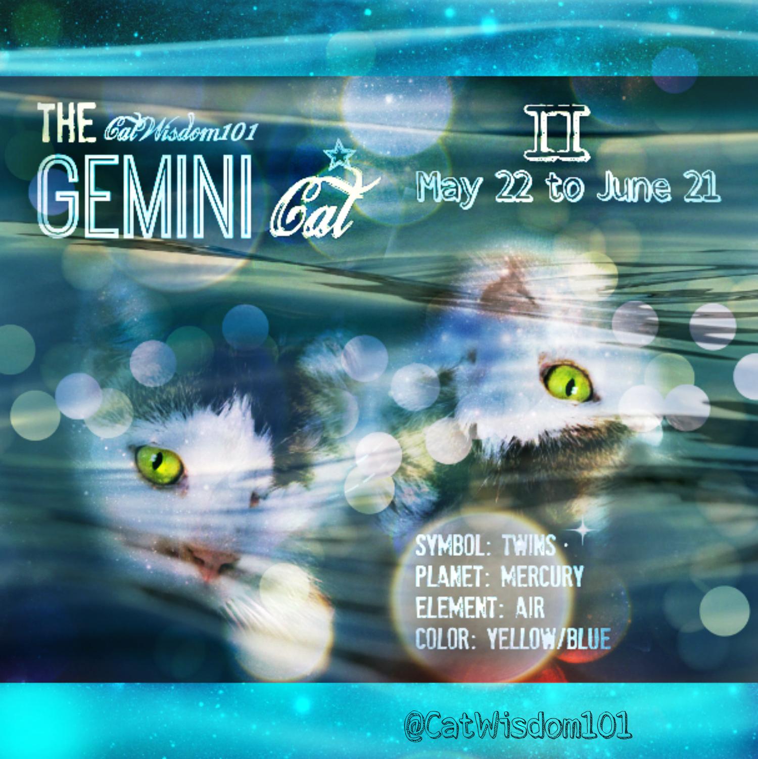 Double The Pleasure, Double The Fun: Astro-Kitty Gemini