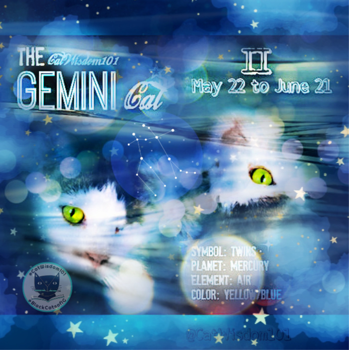 cat astrology art gemini cats
