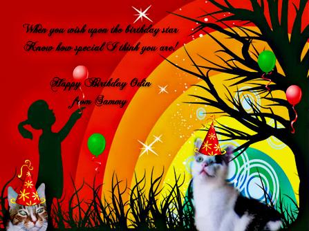 birthday card cat odin