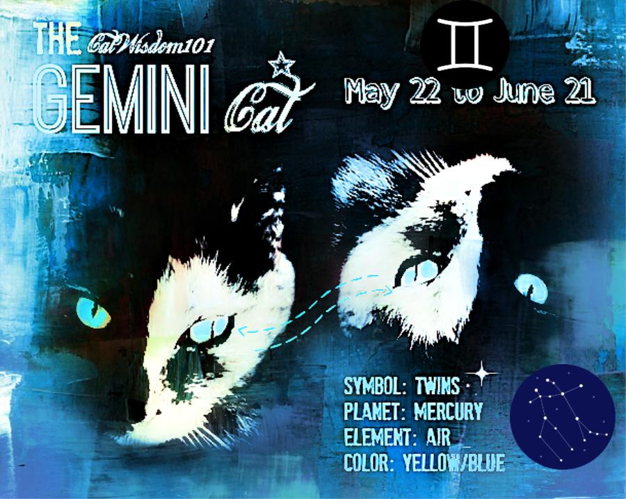 Gemini cat astology zodiac art